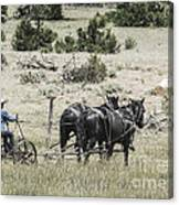 Art Of Horse Plowing Canvas Print