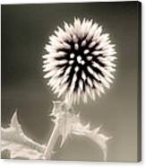 Artistic Black And White Flower Canvas Print