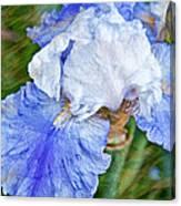 Artistic Japanese Iris Blue And White Flower Canvas Print