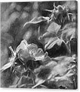 artistic painterly Black and white monochromatic two dogroses summer 2014 Canvas Print