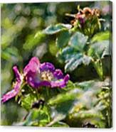 Artistic Painterly Two Dogroses Summer 2014. Canvas Print