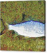 Artistically Painted Fish Canvas Print