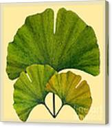 Arts And Crafts Movement Ginko Leaves Canvas Print