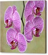 Artsy Phalaenopsis Orchids Canvas Print