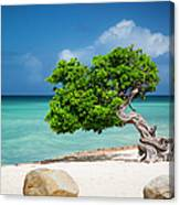 Aruba Tree Canvas Print