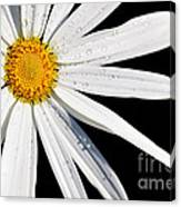 As Bright As A Daisy... Canvas Print