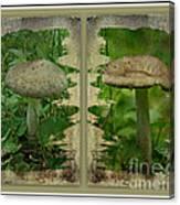 As I Age - A Mushroom's Tale Canvas Print