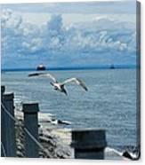 As The Seagull Flies Canvas Print
