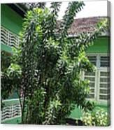 Asant Plants Canvas Print