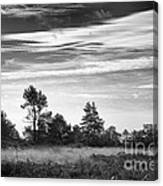 Ashdown Forest In Black And White Canvas Print
