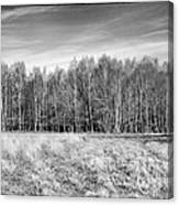 Ashdown Forest Trees In A Row Canvas Print