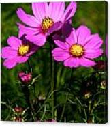 Asheville Wildflowers Canvas Print