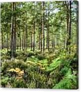 Ashley Heath Forest Canvas Print