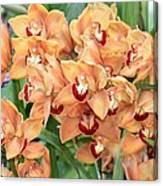 Asian Corsage Orchid Canvas Print
