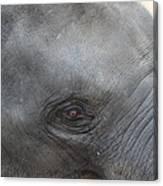 Asian Elephant Face Canvas Print