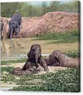 Asian Elephants - In Support Of Boon Lott's Elephant Sanctuary Canvas Print