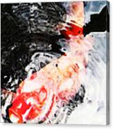 Asian Koi Fish - Black White And Red Canvas Print