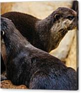 Asian Otters Canvas Print