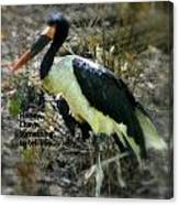 Asian Stork With Message Canvas Print