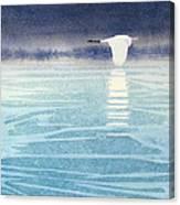 Asian Swan Canvas Print