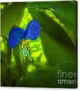 Asiatic Dayflower Canvas Print