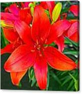 Asiatic Hybrid Lily Canvas Print