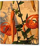 Asiatic Tiger Lily Canvas Print
