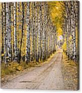 Aspen Alley Canvas Print