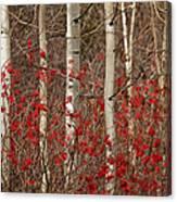 Aspen And Berries Canvas Print