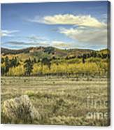 Aspen And Boulder Canvas Print