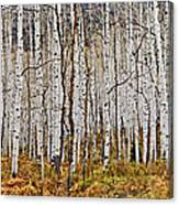 Aspen And Ferns Canvas Print