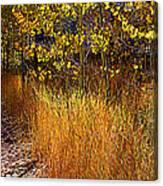 Aspen And Grass Canvas Print