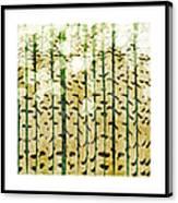 Aspen Colorado Abstract Square 3 Canvas Print