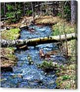 Aspen Crossing Mountain Stream Canvas Print