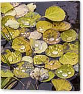 Aspen Drops Canvas Print