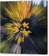 Aspen Explosion Canvas Print