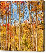 Aspen Fall Foliage Portrait Red Gold And Yellow  Canvas Print