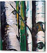 Aspen Glade At Dusk Canvas Print