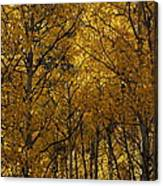 Aspen Glow Horizontal Canvas Print