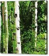 Aspen Grove 2 Canvas Print