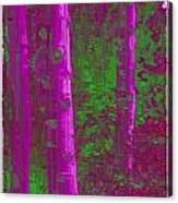 Aspen Grove 4 Canvas Print
