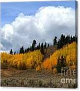 Aspen Hillside Canvas Print