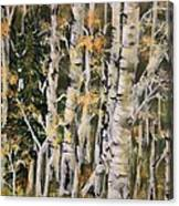 Aspen Hollow Canvas Print