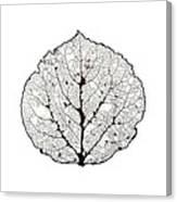 Aspen Leaf Skeleton 1 Canvas Print