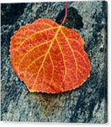 Aspen Leaf  Canvas Print