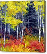 Aspen No.1 Canvas Print