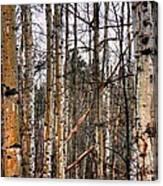 Aspen Patterns 14438 Canvas Print