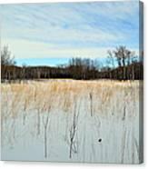 Aspen Prairie 2 Canvas Print