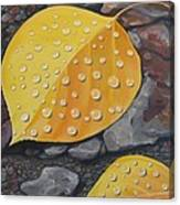 Aspen Rain Canvas Print