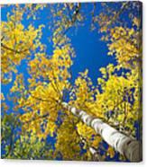 Aspen Sky Canvas Print